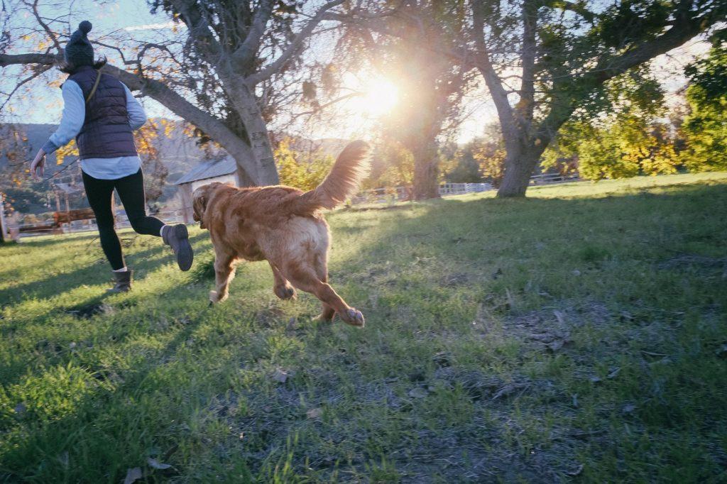 Hunde halten uns gesund