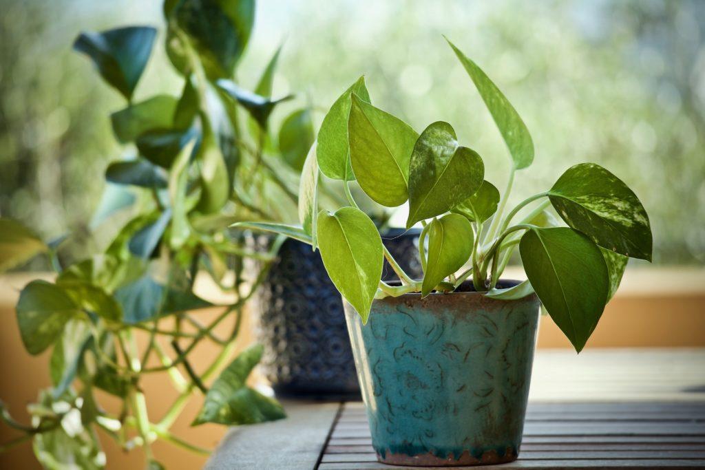 5 Pflegeleichte Zimmerpflanzen, die Ihre Luft verbessern
