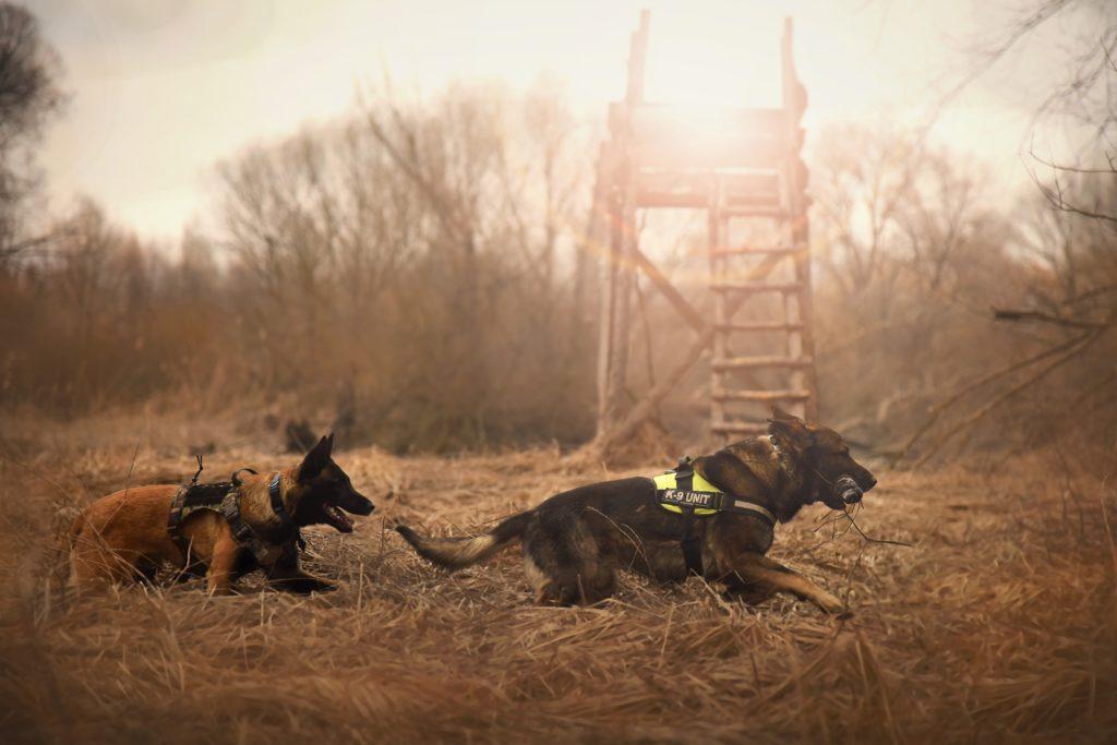 Schäferhund als Gebrauchshund